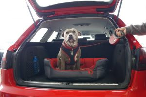 Window Tinting To Reduce Heat For Dogs