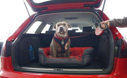 Dogs & Cats In Cars How Window Tinting Helps